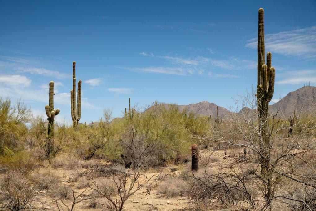 Desert surrounding Taliesin West